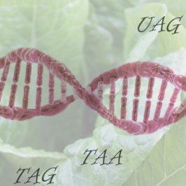 Kava – genetski mapiran genom
